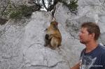 Noen flere apekatter